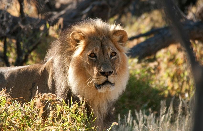 L'Afrique du Sud sauvage : Safaris, Bush & Grands Espaces