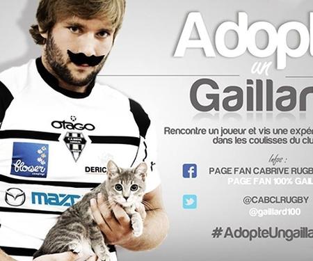 Adopte un Gaillard, la campagne très friendly de la ville de Brive